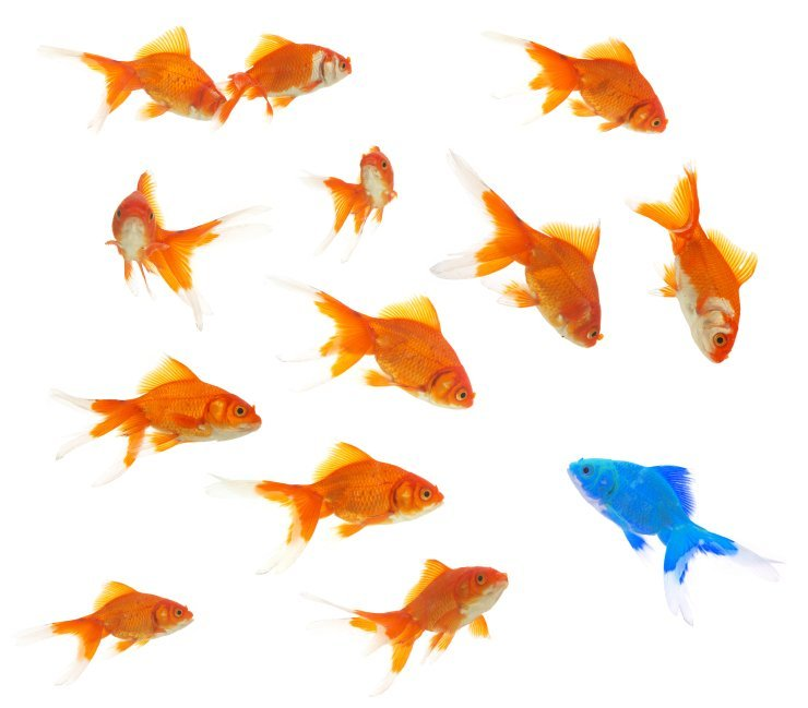 Fish standing out from the crowd, like our IFA fees